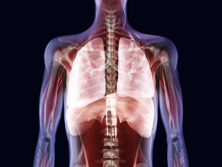 Anatomía, funciones y afecciones de la tráquea | Fitness Life Style ...